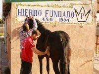 Cepillando al caballo