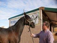 Examinando al nuevo caballo