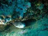 海洋动物群