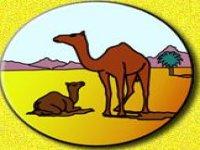 Tenerife Camel Park Paseos en Camello
