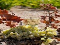 Nuestro vino Fino