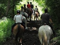 Horse riding for groups