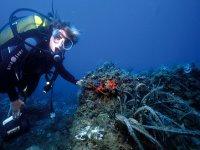 Nada entre fauna marina
