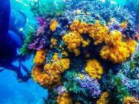 淹没在参观资金gaditanos五彩缤纷的海底野生动物潜水员