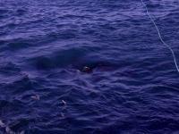 Zona de atunes