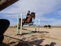 Caballo saltando la valla