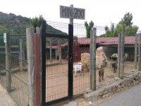 Mini zoo con animales
