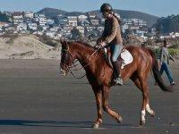 Practicar rutas a caballo