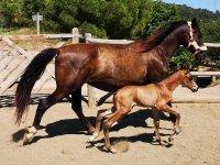 儿童骑马课程