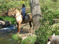 A caballo tras el arbol
