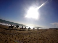 Horses lined up along the beach