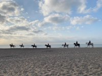 With the horses on the shore at sunset