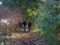 在茂密的森林里徒步旅行