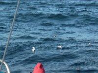 Gaviotas en la costa vasca