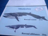 Rorcuales de Vizcaya