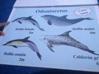 Tipos de delfines del norte peninsular