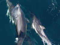 Delfines en el cantabrico