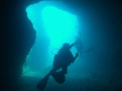 Diving Martin