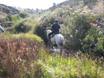 骑马课程20小时奖励