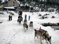 mushing en la nieve