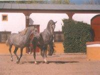 快来和我们的马匹见面了--999-农场上的马匹