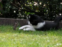 Raton frente a gato