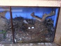 nido de cigueña