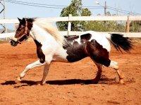Fabulosos caballos