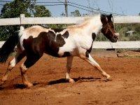 Los mejores caballos