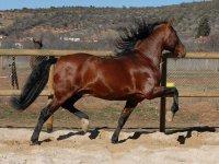 Spettacolare cavallo per l'itinerario