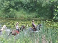 Entering the water with the horses