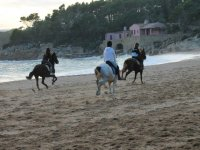 Jogging on the horses by the sea