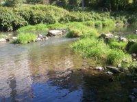 Acque del fiume Urola