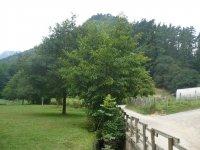该地区的树木