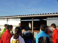 Visitando a los caballos