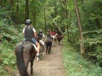 我们的一个在森林中骑小马教训狗