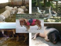 各种动物服务村