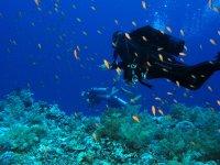 immersione tra pesci