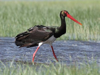 ActivatenCabañeros Ornitología