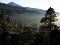 Montes Aguamansa, La Orotava