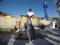 Pesca de tunidos en Tazacorte