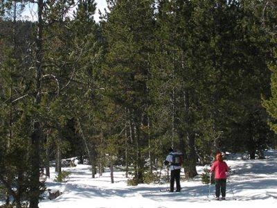 Aransa Esquí de Fondo