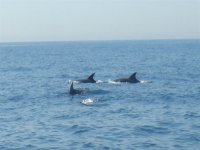 Discover the wildlife on board