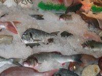 Pesca en Sevilla