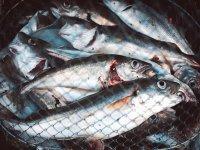 Capturas en la pesca