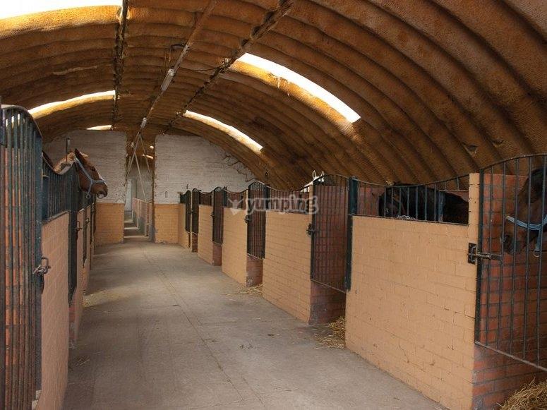 Las cuadras de nuestras instalaciones