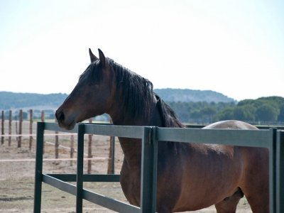 Horse riding tour in Simancas, Valladolid, 2 h