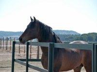 Uno de nuestros espectaculares caballos
