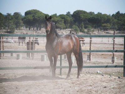 4 h horseback ride at Simancas