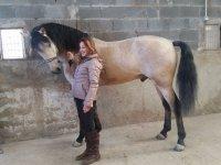 Acariciando al caballo